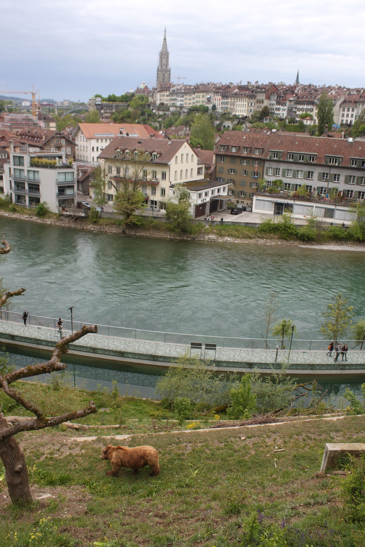 The bear park in Bern