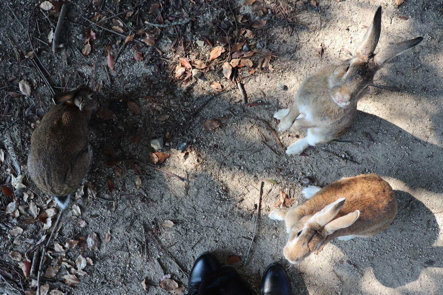 Highlight: Okunoshima (Bunny Island)