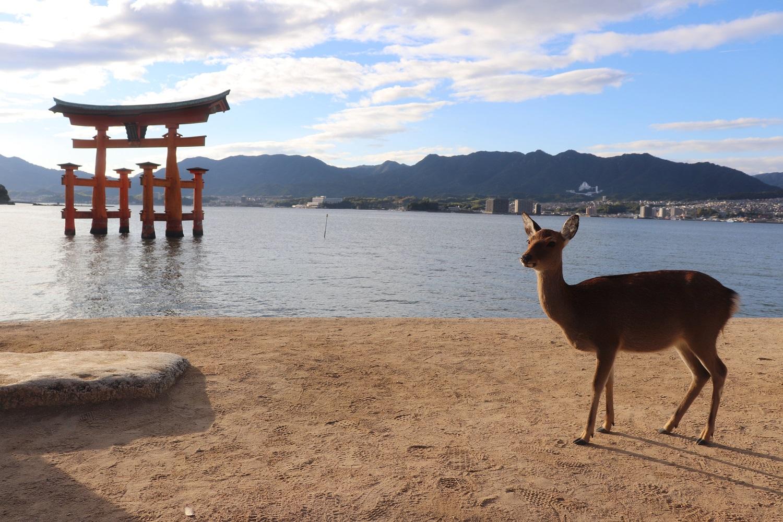 Highlight: Miyajima (Itsukushima)