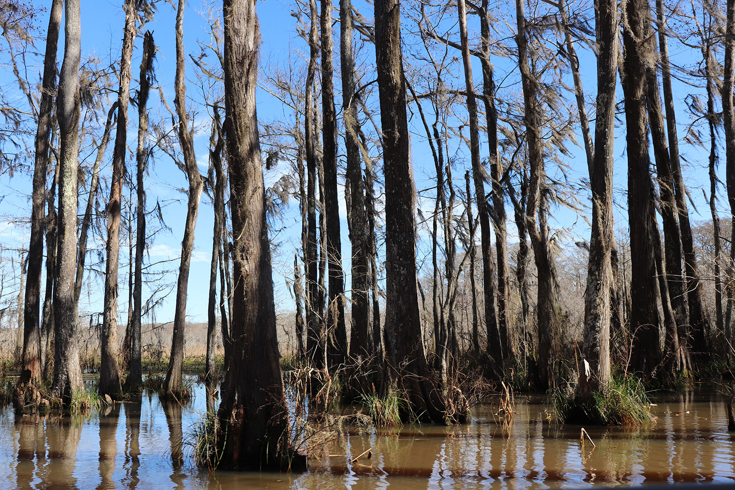 Louisiana Swamp Tour