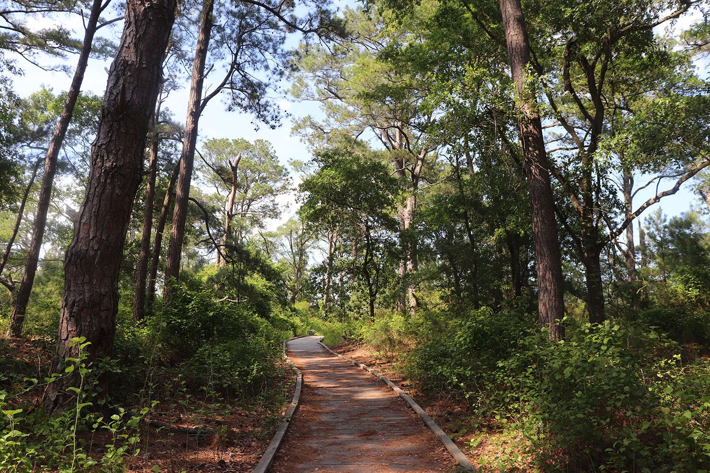 Woodland Trail, Chincoteague Wildlife Refuge