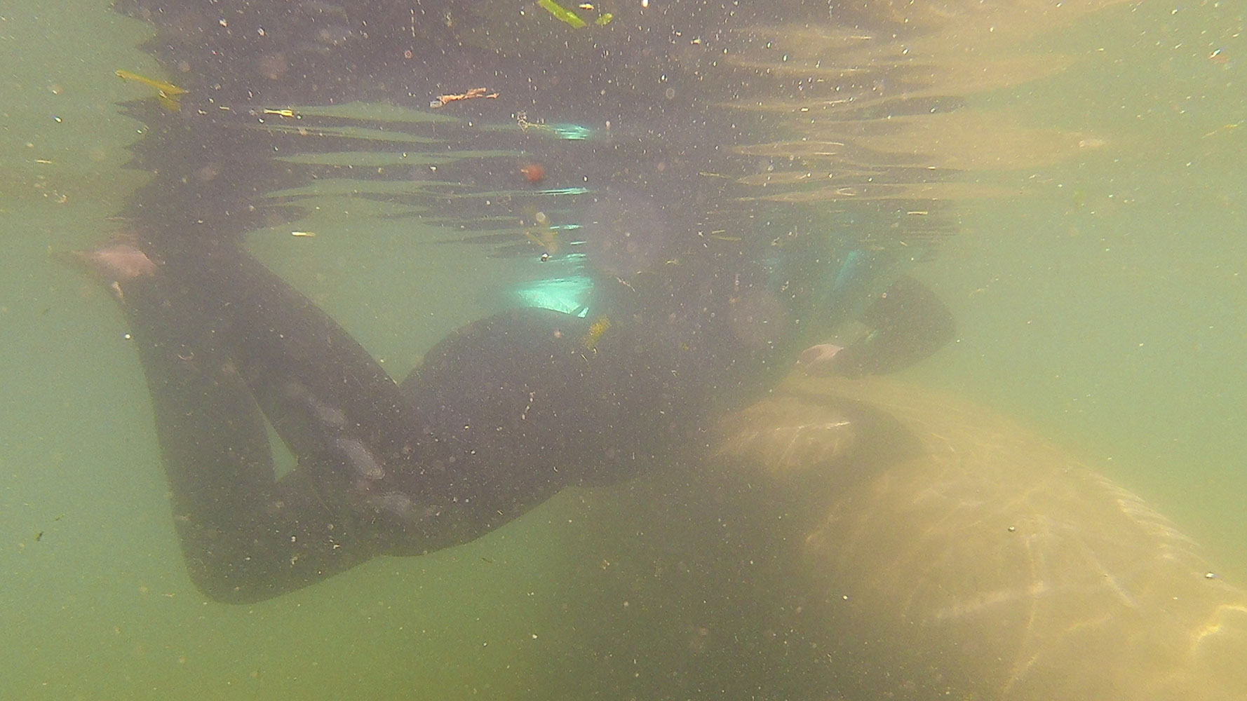 Swimming with Manatees in Crystal River, FL